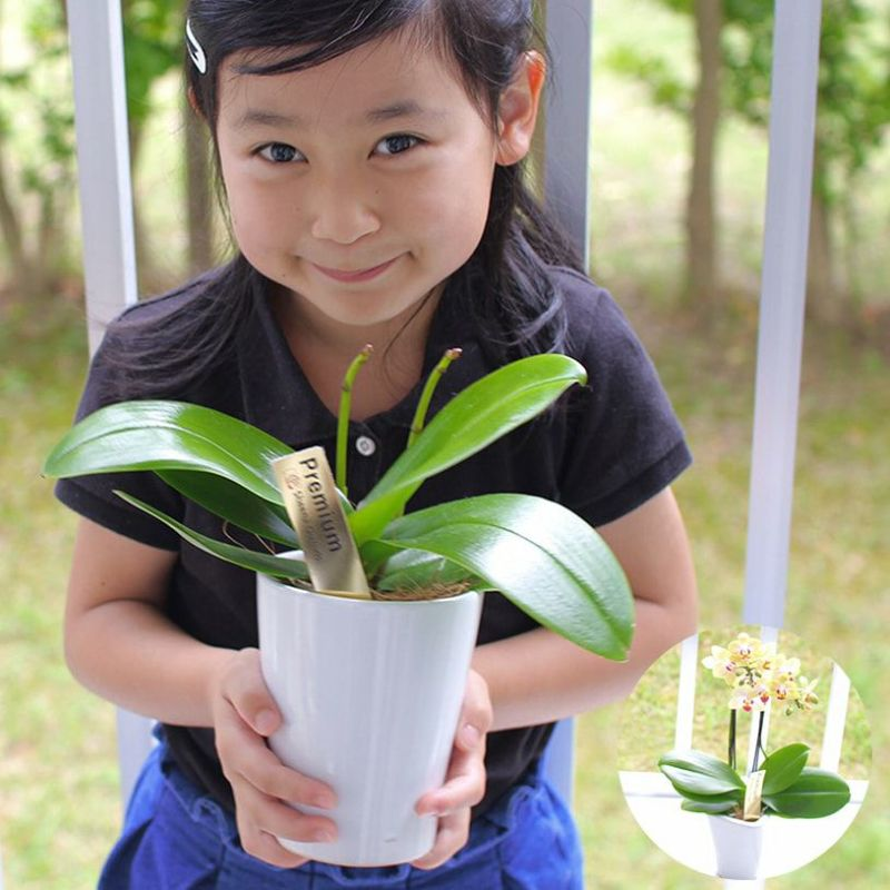 胡蝶蘭栽培キット